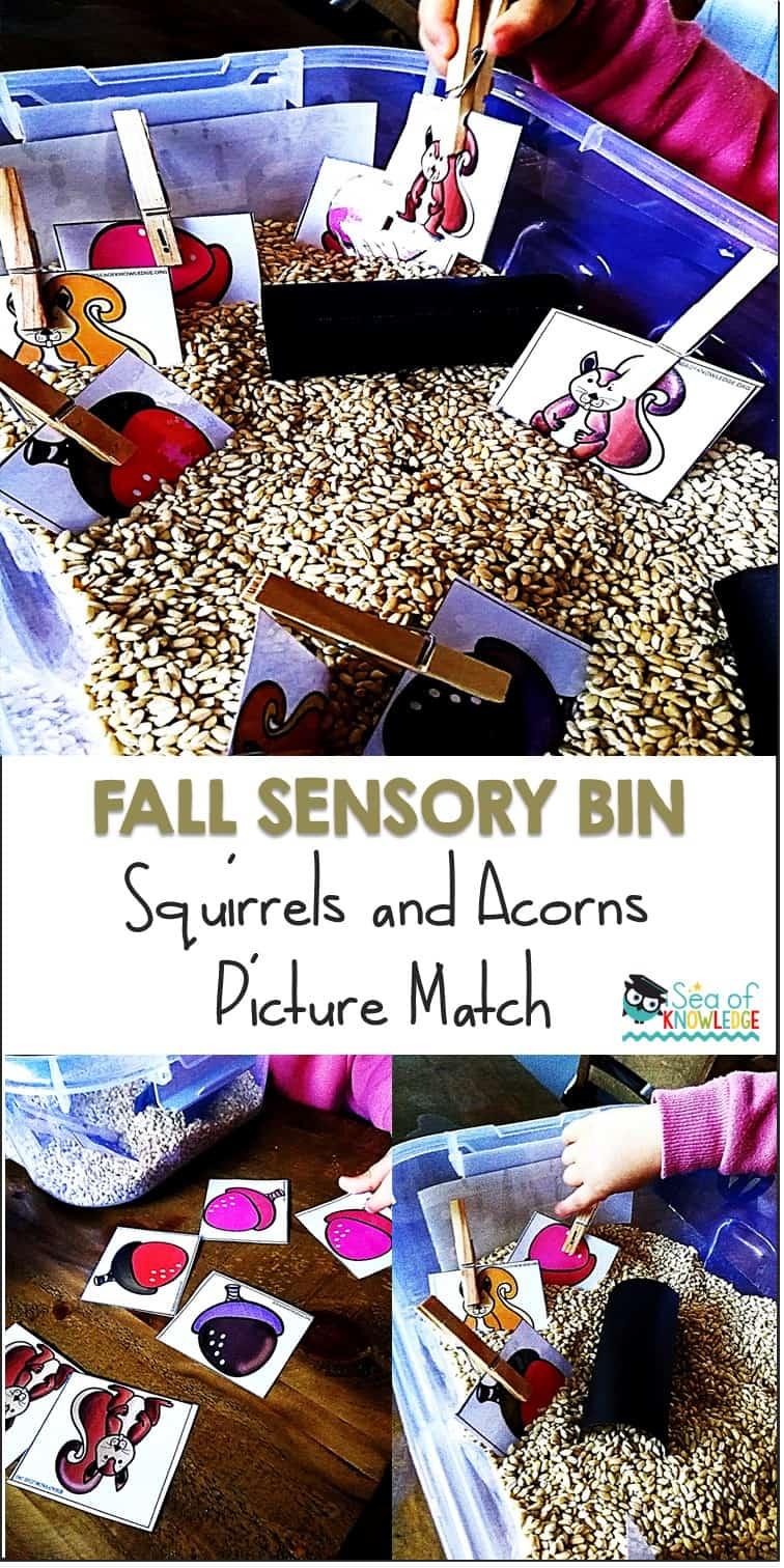 Fall Sensory Bin Acorns and Squirrels Color Picture Match